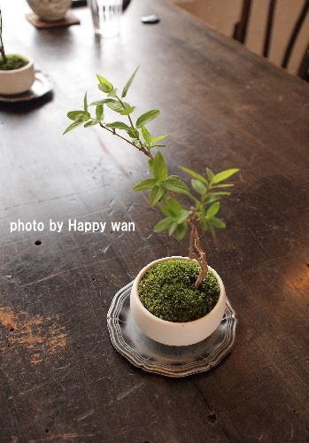綴る~言葉と草木の盆栽展~cafeうづきさん