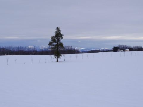 26㎝の重たい雪でした。