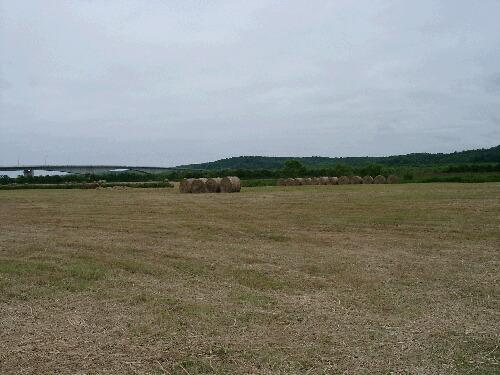 ブログ仲間の牧草地