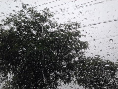雨ですなぁ〜