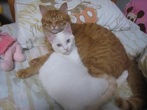 抱き合って眠るの 2