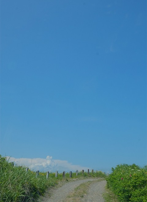 トイトッキ浜原生花園