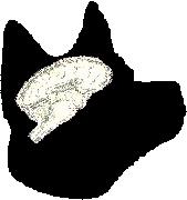 ♪犬の脳の世界。。。♪