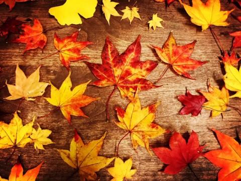 秋から冬へ、そして、、
