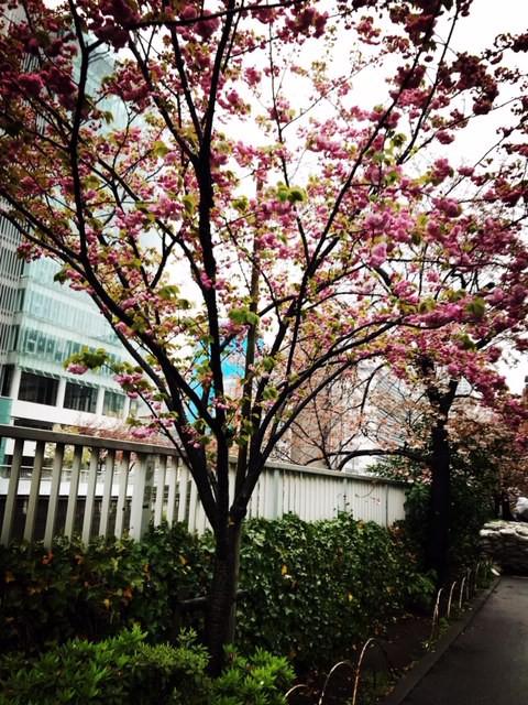 先週の東京。