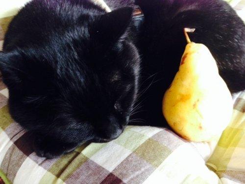 のどのカサカサに梨はいかが?