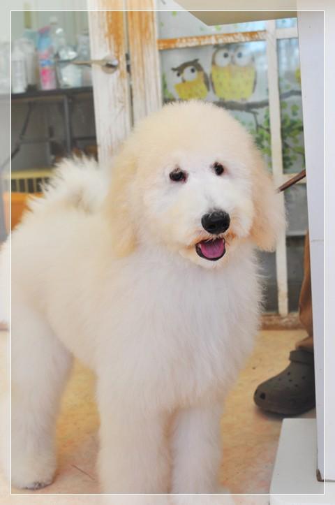 10年間で初めての犬種~~~
