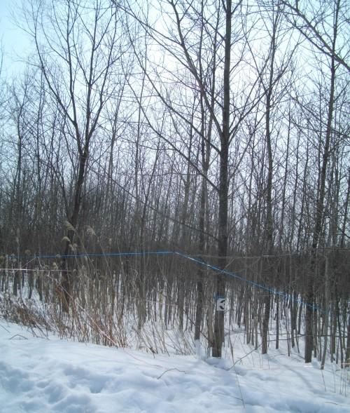 休みは河原へ柴刈りへ・・・