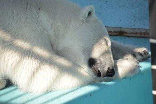 動物園の仲間たち写真館オープン(第1回 「睡」の間)