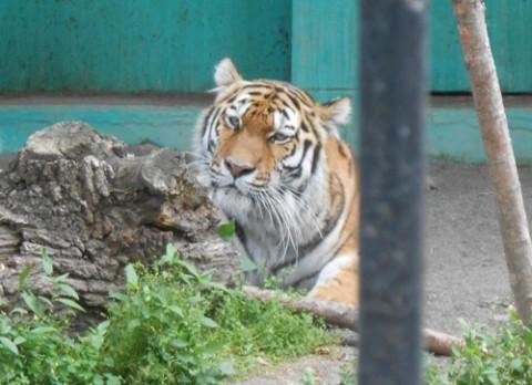 動物園の仲間たち写真館2(マオ特集)