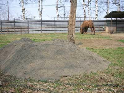 ラクダ と 砂 の関係