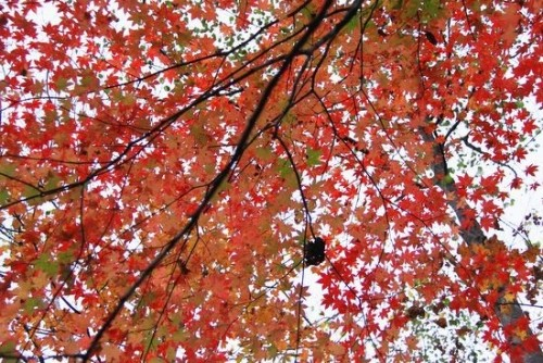 糠平の紅葉真っ盛り