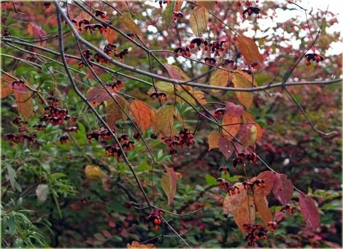 秋の実三種と茸が三種