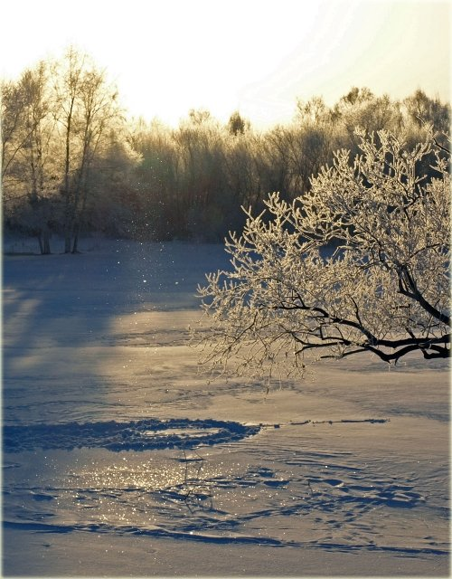 この冬初のダイアモンドダストとその結晶