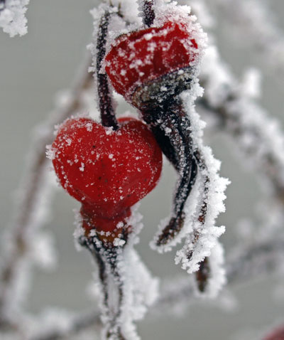 赤い実を探して、見つけた4種