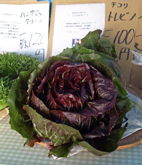 野菜直売所の変わり野菜