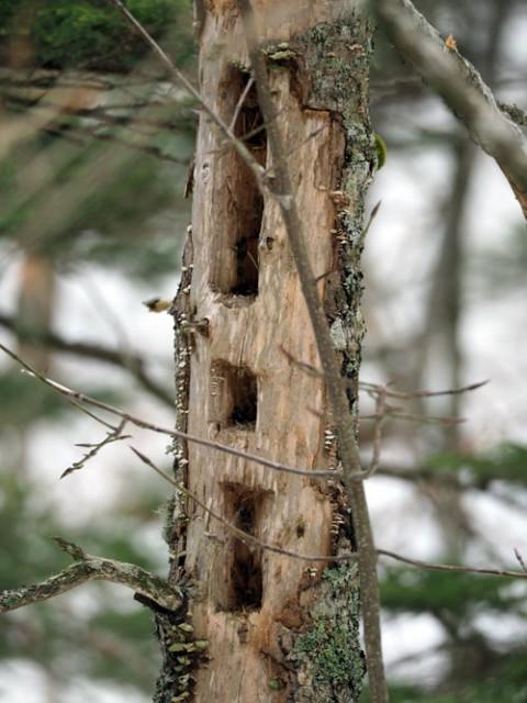 野鳥の採餌木