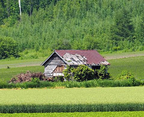 畑の中の廃屋」