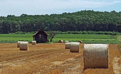 小麦ロールと廃屋 今朝の朝霧