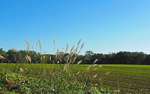 昨日は初小麦畑、今朝は初白い虹