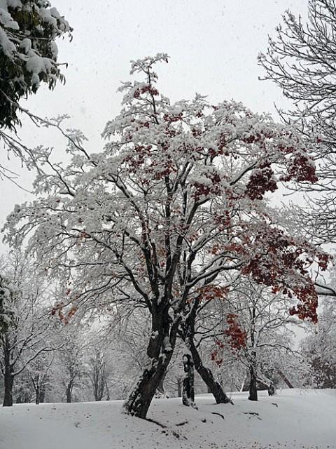 昨日の雪景色と今朝はアイスバーン