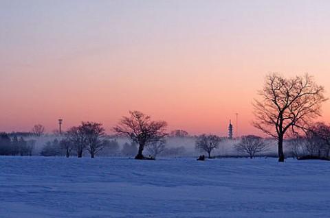 冷え込んだ朝の染まる霧氷
