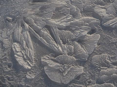 氷に咲いた冬の花