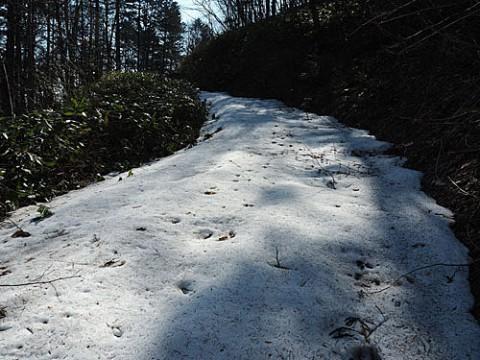雪があって行けず新しい場所で採取