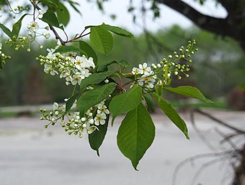 荒れた河川敷に咲く花