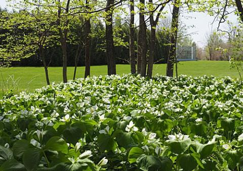 六花の森は花盛り