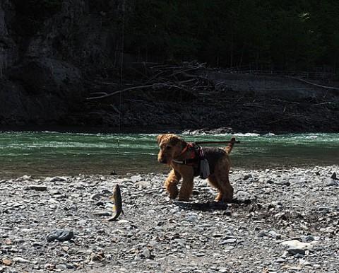 歴船川で釣り