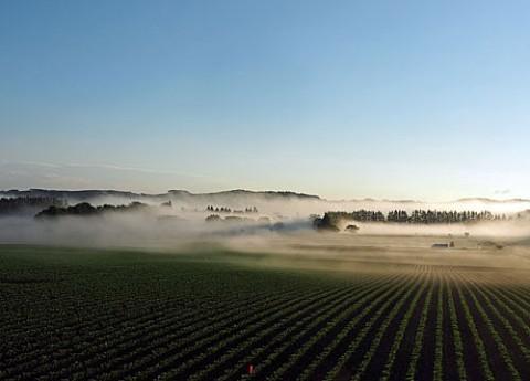 幕別高台からの朝霧と雲海風景