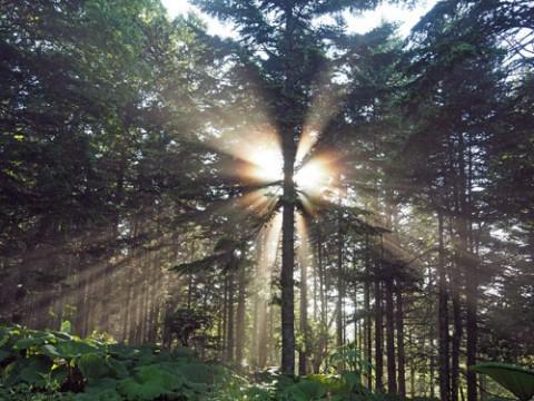 朝霧光芒見る角度を変えて・・