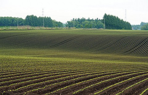 10日の畑と今朝は森の展望台