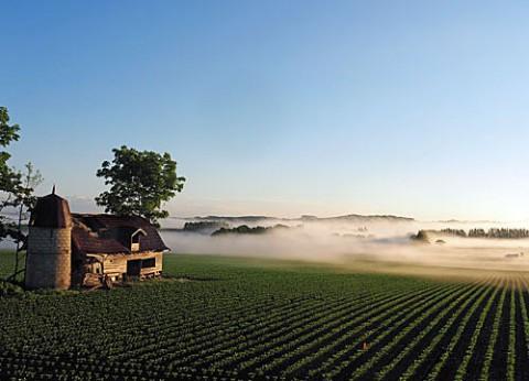 朝霧の中の廃屋