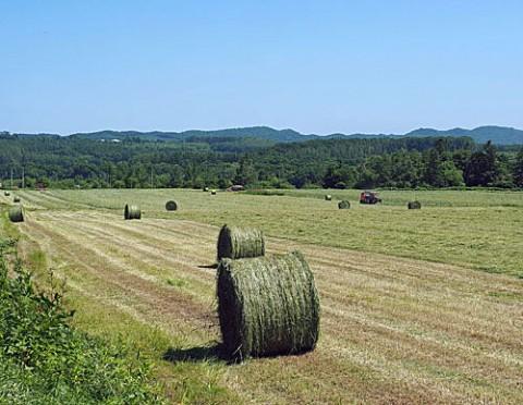 牧草ロール作り作業中