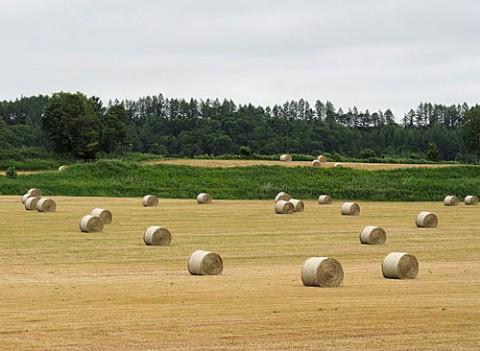 並ぶ牧草ロール