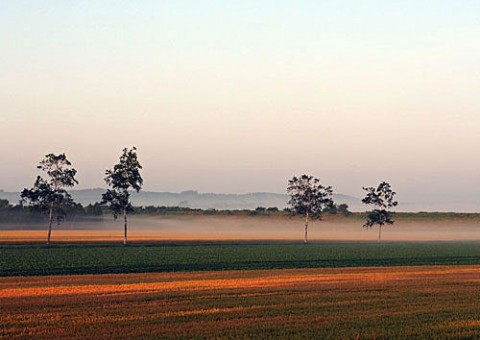 幕別の畑の朝霧