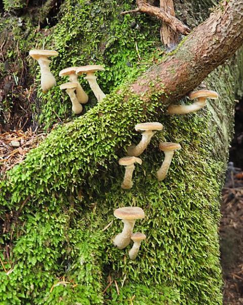 芽登の山で採取した茸