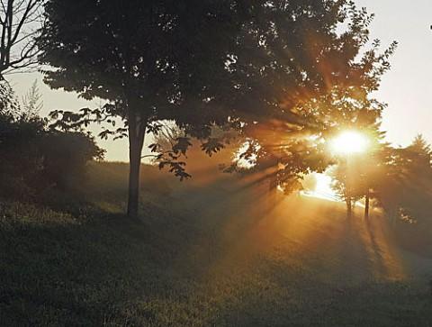 朝霧光芒とコスモス