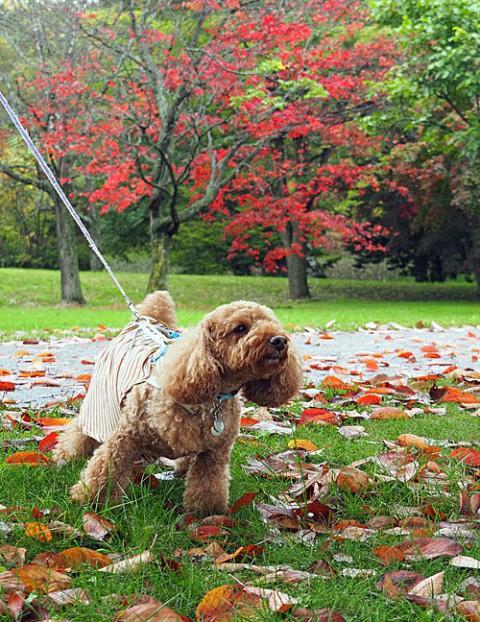 紅葉のきれいな緑ヶ丘で・・