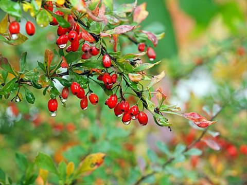 雨の緑ヶ丘で写した種子とリス