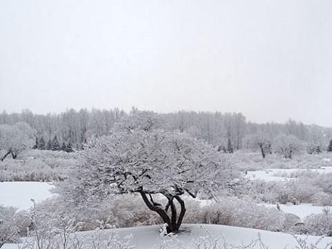 降雪量が少なくて良かった!