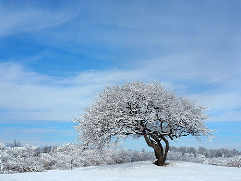 雪景色は青空に映える