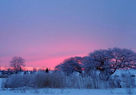 ピンクの朝焼けと霧氷