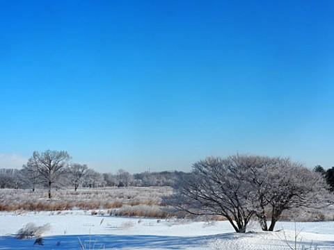 元ゴルフ場の霧氷風景