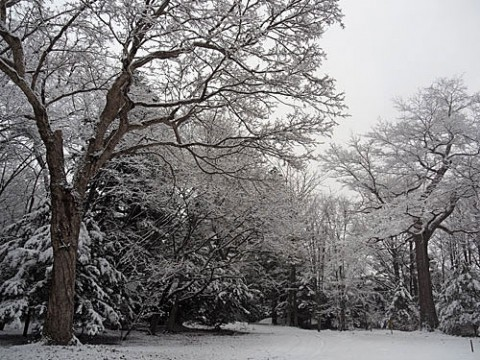 帯広神社の雪景色