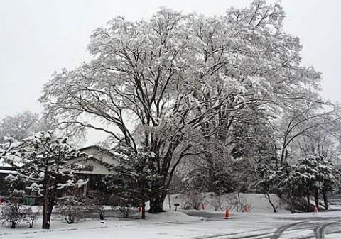 水公園と東の雪景色
