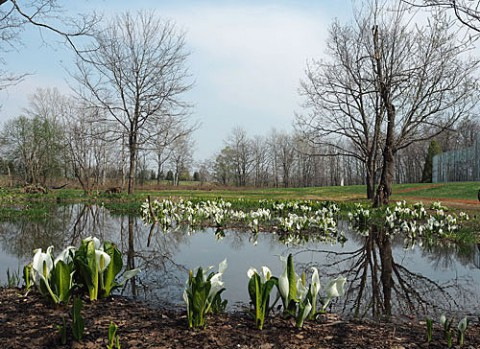 中札内・六花の森の野草
