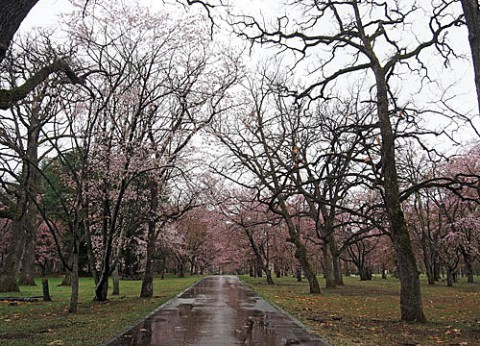 雨の日のすずらん公園